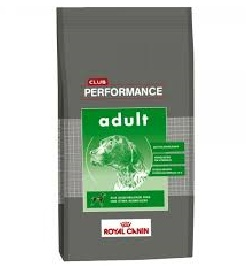 Performance Adulto